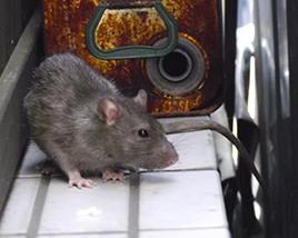 ネズミ防除